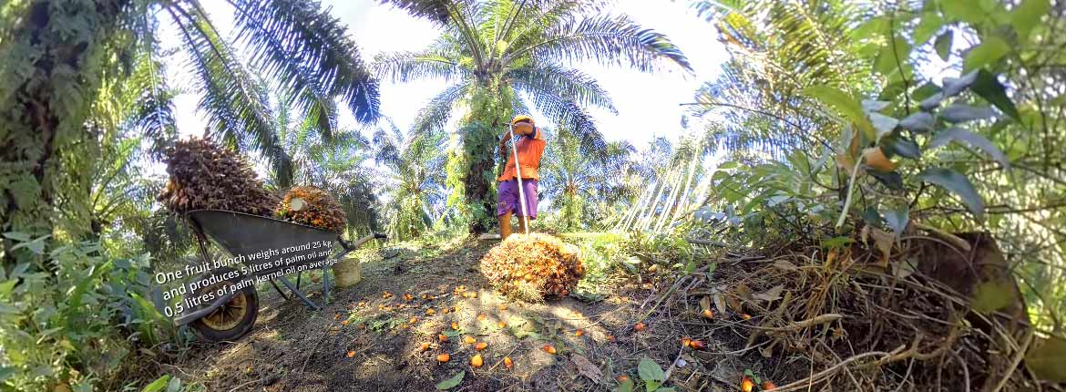 Palm Oil VR - European Palm Oil Alliance